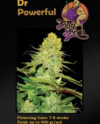 dr powerful fatty seeds