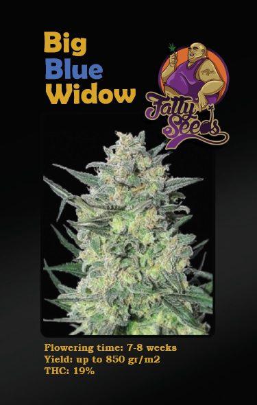 Big Blue Widow nasiona marihuany feminizowane