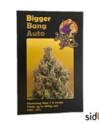 Bigger Bang Auto fatty seeds nasiona marihuany FEMINIZOWANE