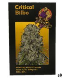 Critical Bilbo fatty seeds nasiona marihuany feminizowane
