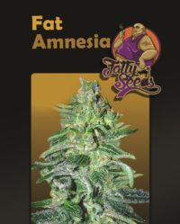 Fat Amnesia nasiona marihuany fatty seeds feminizowane