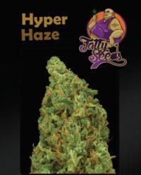 hyper haze fatty seeds nasiona marihuany feminizowane
