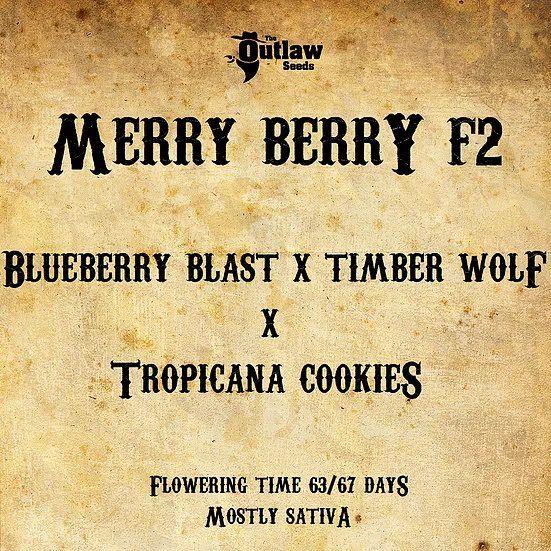 Merry Berry F2 the outlaw seeds nasiona konopi niefeminizowane